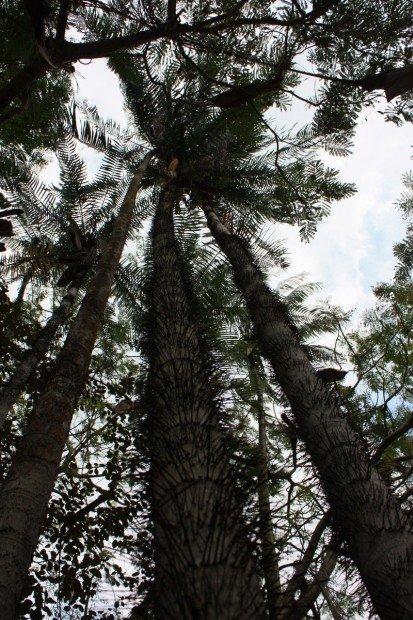 Парк Вихарамахадеви, Виктория, Коломбо, Шри-Ланка, фото