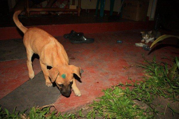 Шри-Ланка, собаки, фото, животные, кошки, кот