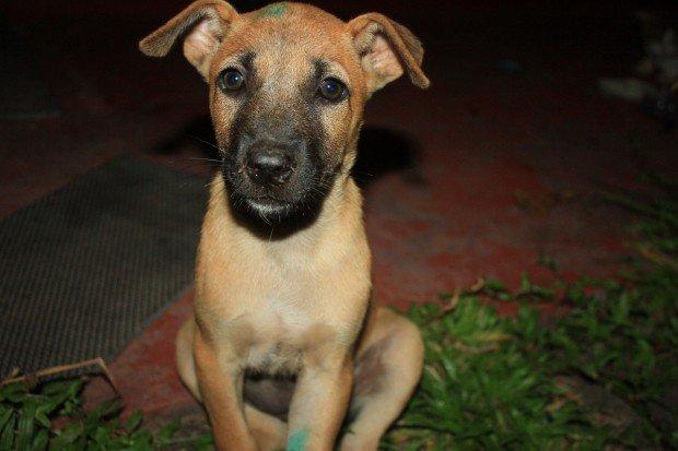 Шри-Ланка, собаки, фото, животные