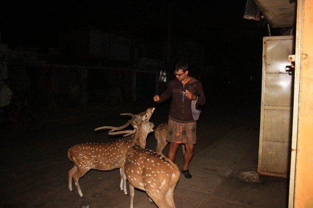 Дорога из Тринко в Анурадхапуру